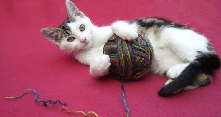 achat accessoires chat