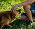 Points d'acupression : comment faire pour soigner son chien anxieux