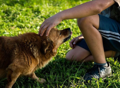 Acupression pour soigner un chien