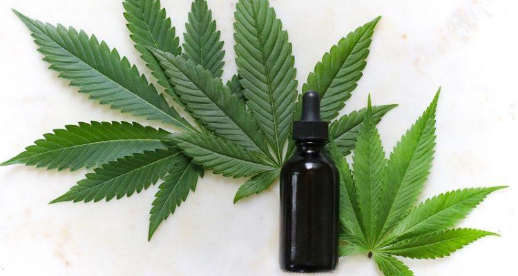 cannabis cbd pour lutter contre le thc