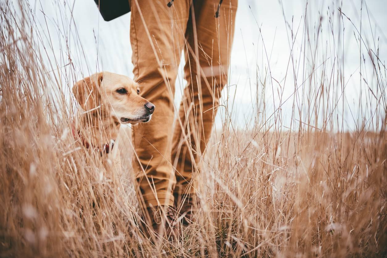chasseur chien