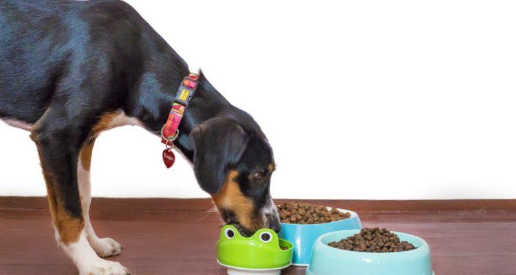 insectes et la nourriture pour chien