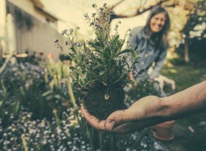 jardinage planter