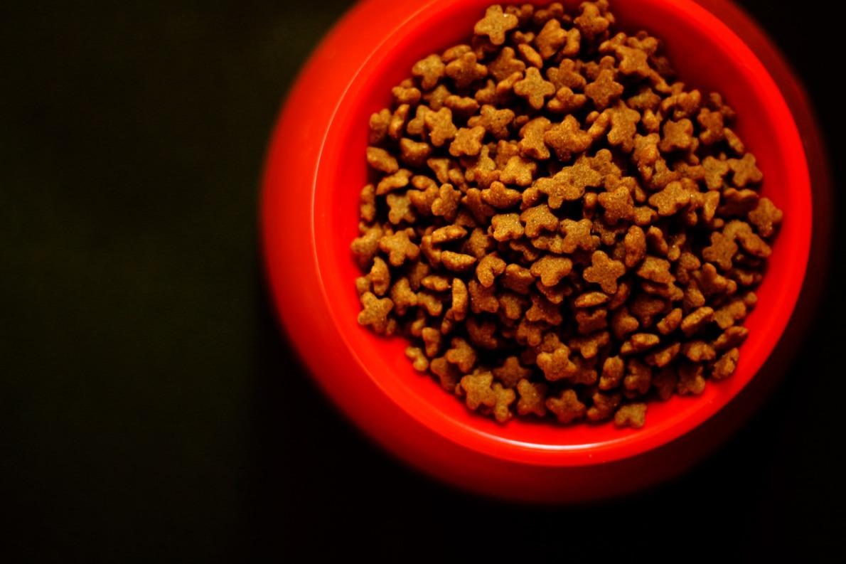 nourriture pour chats à base d'insectes