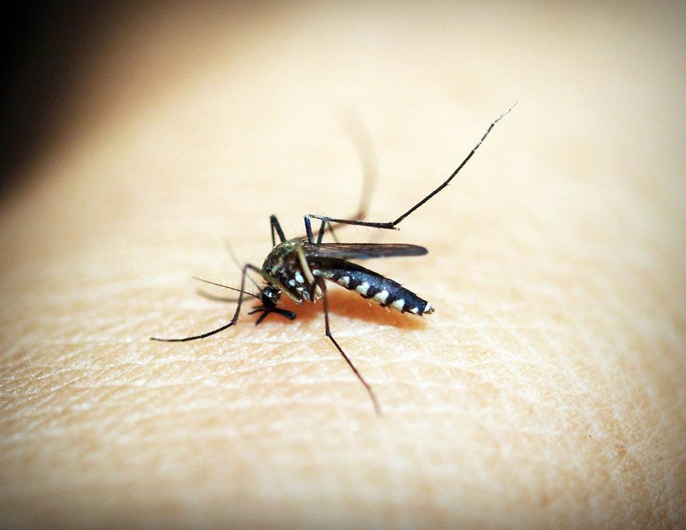 protection moustiques