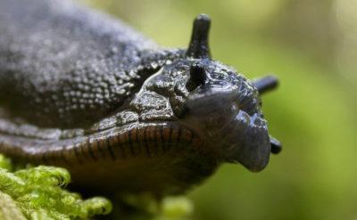 Solutions naturelles pour supprimer les escargots